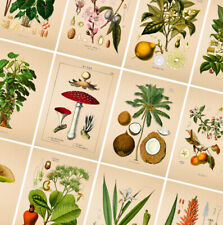 VINTAGE BOTANICAL POSTERS PRINTS - A4 A3 A2 Poster - Wall Art Home Flower Decor
