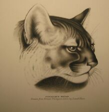 Original Lowell Hess 'Cougar Head' Drawn from Ernest Thompson Seton Illustration