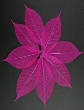 #  10 Pink Skeleton Rubber Tree Leaves 6 to 8cm