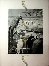 Presidente del Comitato (PAPPAGALLI), H Stacy Marks, Illustrazione Libro, 1891