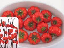 Heirloom Eggplant Pumpkin on a Stick Edible or dry as ornamental 15 seeds