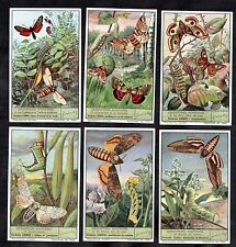 Moths & Caterpillars Cards Set 1950 Liebig Insects Lepidopteres