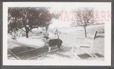 Vintage Photo Man in Hammock w/ Pet Collie Dog 731841