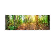 Naturbild Panorama Forst Wald Sonnenuntergang Bäume Wiese Moos gerahmt XXL Druck