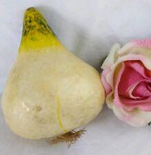 Vintage Paper Mache Onion Realistic Vegetable Food Display Stage Prop