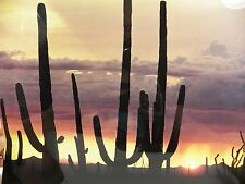 "Vintage Color Photo Arizona Landscape Giant Saguaro Cactus in Sunset 11"" x 14"""