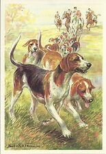 1960 Scholz Berlin Morning News Dog Art Print American or English Foxhound Pack