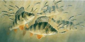 """Fish River fishing Art print Perch """" Minnow Mayhem"""" David Miller Limited Edition"""