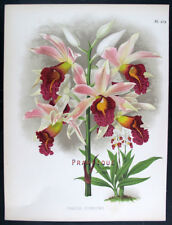 1881,J.N. FITCH WARNER'S ORCHIDS Painted by Hand PHAJUS COOKSONII WMP
