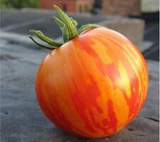 Tomato Zebra Orange,Tomato Garden Seeds [RARE]  Exp. 2021, 0,1 g