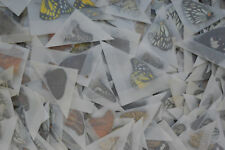 Lot of 100 Mixed Unmounted Butterflies Colourful butterfly Artwork Vietnam New
