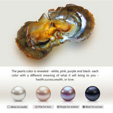 1PC 7-9mm Round akoya Pearl in Oyster Clam Birthday Gifts NEW HOT Pendants