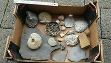 Kiste interessanter Fossilien - diverse Fundorte - Ammoniten, Muscheln uvm