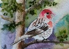 Hand Painted Original Watercolor ACEO HOUSE FINCH Bird Wildlife Signed by JV