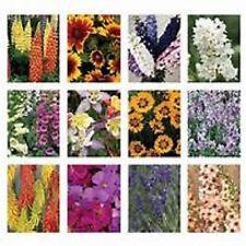 5 X PERENNIAL GARDEN PLANT'S IN 1.5lt POT'S, HARDY COTTAGE GARDEN MIXED PLANTS