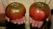 100 Heirloom PURPLE CHEROKEE TOMATO Seeds + Free Gift