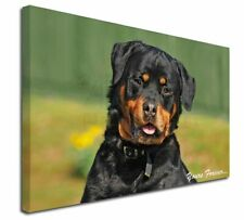 More details for rottweiler dog 'yours forever' x-large 30