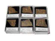NWA 2844 L5 meteorite slice in Square display case Early NWA number