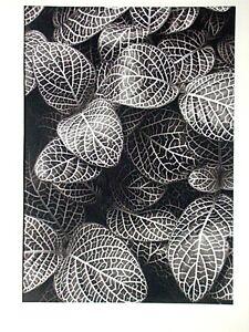 Kipton Kumler, 10 Fotografien/Palladium 1977, signiert, Portfolio of Plants