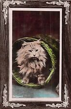 POSTCARD    CATS     On  Guard