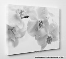 Hot X Large ORCHID FLOWERS White Grey Canvas Prints Wall Art Pictures Unframed