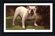 Gallaher Dogs 2nd Series 1938 - Bulldog No. 33