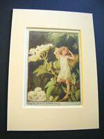 Vintage FLOWER FAIRIES PRINT & MOUNT Elderflower Fairy CICELY M BARKER c1930's