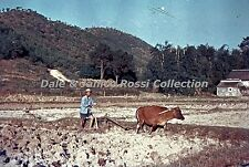 HK313 35mm Slide Ploughing the Fields Hong Kong Blue Border Color Transparancy
