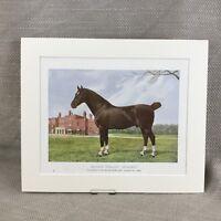1905 Pferd Hackney Hengst Danegelt Nieten Reiter Kunst Chromolithographie Druck