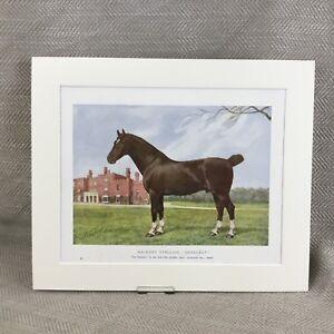 1905 Horse Hackney Stallion Danegelt Stud Equestrian Art  Chromolithograph Print