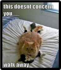 Funny Cat Humor This Doesn't Concern You Refrigerator Magnet