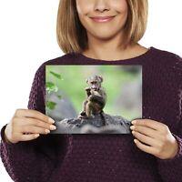 A5 - Baby Baboon Animal Monkey Print 21x14.8cm 280gsm #12481