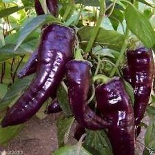 10 Purple Marconi Seeds,Op, Organic Italian Pepper -Capsicum annuum !