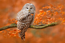 BEAUTIFUL OWL CANVAS PICTURE #1 STUNNING NATURE COUNTRYSIDE A1 CANVAS FREE P&P
