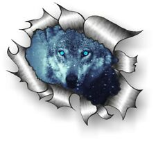 CLASSIC Ripped Open Torn Metal Rip & Beautiful Wolf with blue eyes car sticker