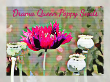 Drama Queen Poppy Flower Seeds 100 plus