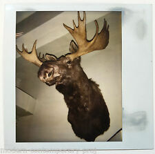 Andy Warhol - unique polaroid of a Moose on the wall. Provenance Fred Hughes.