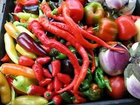 80 Seeds Serrano MASSES OF HOT FRUITS Heirloom BULK CHILLI