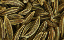 300 graines de CARVI (Carum Carvi)ANIS DES VOSGES H384 CARAWAY SEEDS SAMEN SEMI