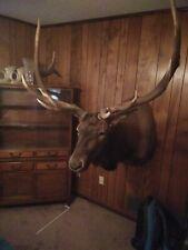 Mounted Rocky Mountain Elk Head