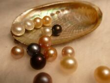 FIFTEEN  AKOYA OYSTERS WITH PEARLS! BEST QUALITY/BEST PRICE/GREAT GIFT