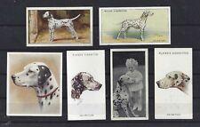 1929 - 1940 UK Dog Art Head & Body Cigarette Card Collection Set of 6 DALMATIAN