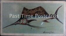 Single: 'SWORD-FISH: FISHES OF THE WORLD' John Player Pub 1903