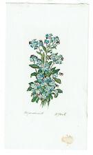 Original firmada & colorierte aguafuerte flor olvídate de mi no de m Blank