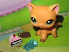 "Pet shop Chat Chaton Europeen * Petshop Kitty Cat # 1643 ""NEUF"" +Accessoires"