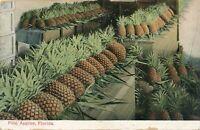 FLORIDA FL - Pineapples Pine Apples - udb (pre 1908)