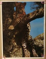 Vintage Poster Leopard in Tree pinup animal cat wild animals safari pinup 1980s