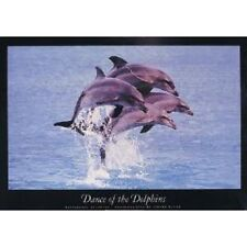 """DANCE OF THE DOLPHINS 91 x 61 cm 36"""" x 24"""" WILD ANIMALS POSTER x"""