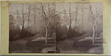 Paysage forestier Photographie Stereo Vintage Albumine c1880