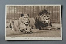 R&L Postcard: London Zoo Zoological Gardens Lion and Lioness
